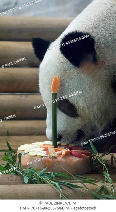 Panda bear Jiao Qing gets a cake on his seventh birhtday in Berlin, Germany, 15 July 2017. The bear born in Chengdu on 15 July 2010 carefully approached the...