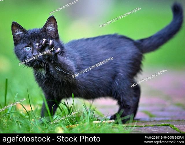 18 October 2020, Brandenburg, Sieversdorf: An approximately eight-week-old kitten explores its surroundings on a meadow in a garden