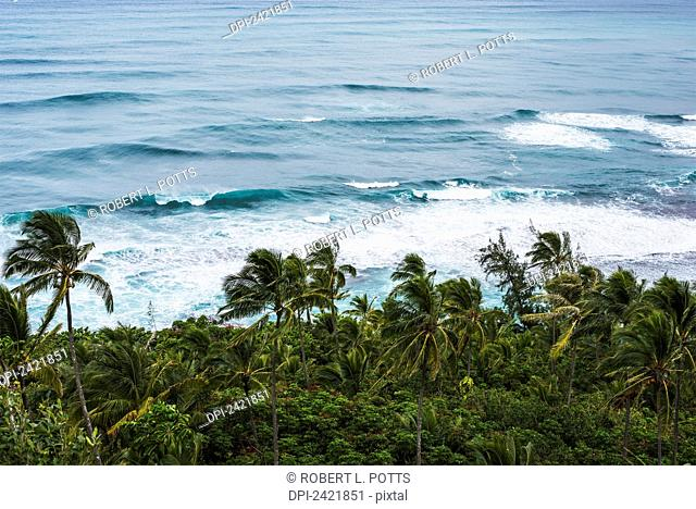 Surf and coconut palms are found along the north shore; Haena, Kauai, Hawaii, United States of America
