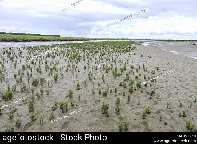 Official nature reserve area and swamp 'The Drowned Land of Saeftinghe' in the southwest Netherlands, located in eastern Zeelandic Flanders