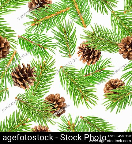 Fir tree branches seamless pattern, pine branch, Christmas conifer isolated on white background, New Year winter pattern