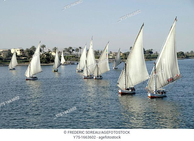 Egypt, river Nile with traditional sailboats feluccas at Luxor