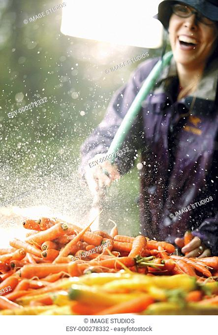 Woman washing carrots with hose outdoors