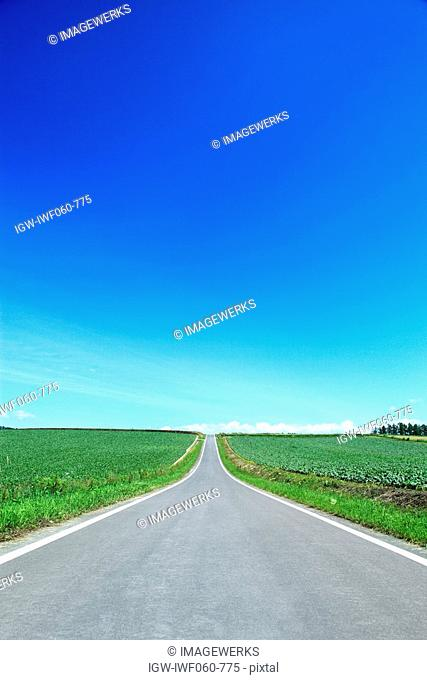 Country road between fields