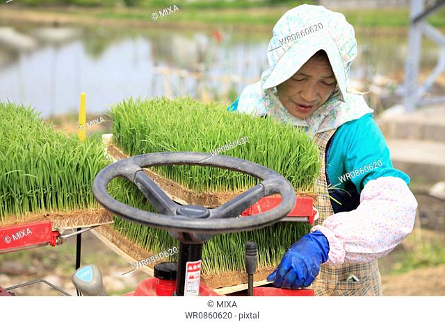 Female Farmer Setting Up Rice Planter