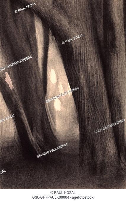 trees cypress dream