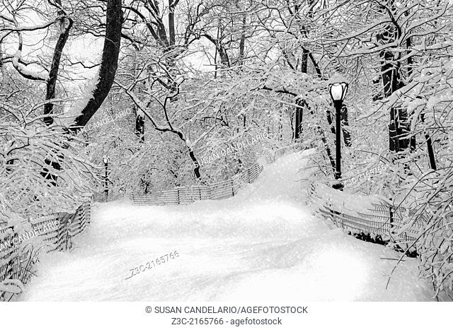 Central Park in New York City is dressed up in white during a winter snow storm. Central Park is an iconic landmark located in Midtown Manhattan