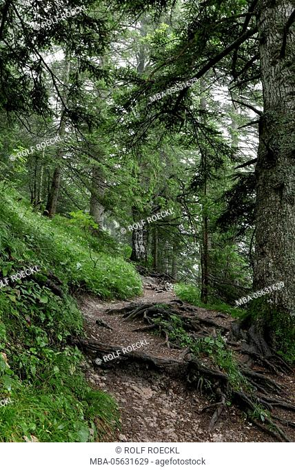 way in the wet mountain wood, Bavarians