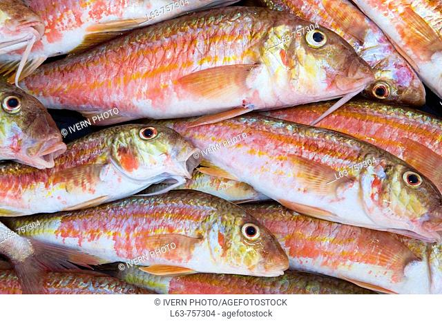 Fresh red mullets, just fished. Cambrils. Tarragona province. Spain