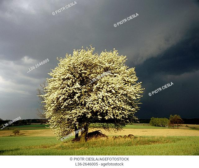 A storm i s coming. Spring. Podlasie region. Eastern Poland