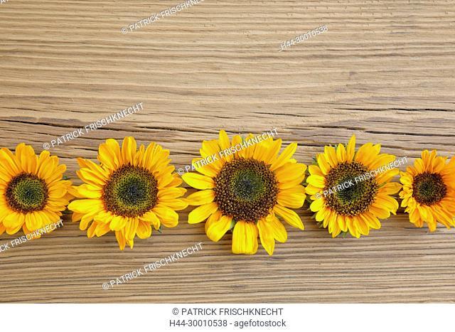 Blumendekoration auf Holz