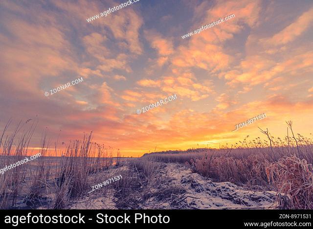 Frozen grass at the sea shore in the sunrise