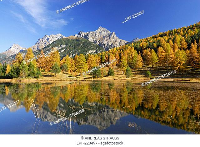 Larches in autumn colours with view to Piz Lischana and Piz San Jon and reflections in mountain lake, Unterengadin, Engadin, Grisons, Switzerland
