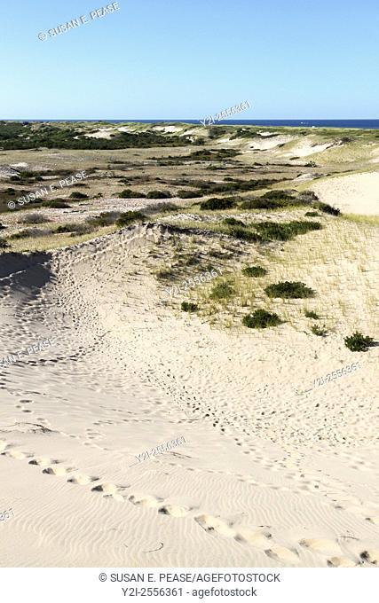 Dunes, Cape Cod National Seashore, Truro, Massachusetts, United States, North America