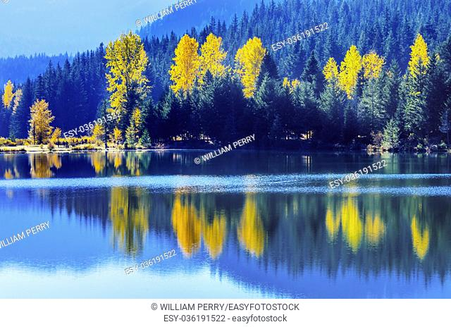 Blue Water Yellow Trees Reflection Island Gold Lake Autumn Fall Snoqualme Pass. Wenatchee National Forest Wilderness. Washington