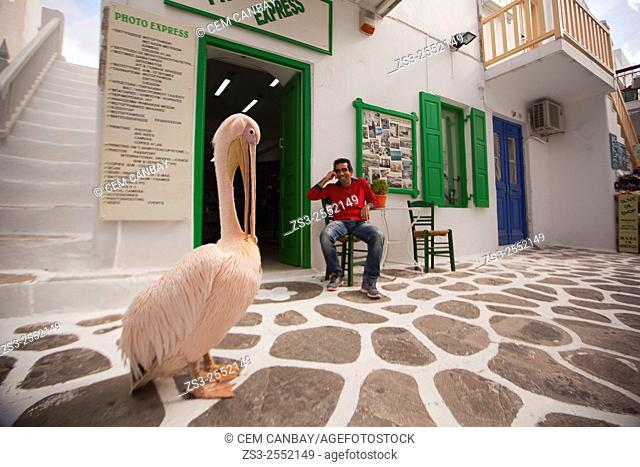 Pelican Petros, the town mascot, at the street in front of a shop, Mykonos, Cyclades Islands, Greek Islands, Greece, Europe