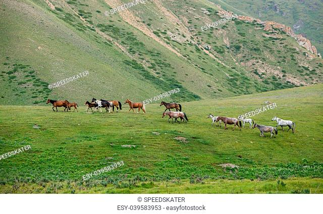 Walking herd of horses, vivid green grass