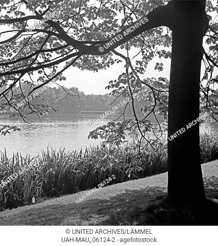 Ein Park in Chemnitz, Deutschland 1930er Jahre. A public garden at Chemnitz, Germany 1930s