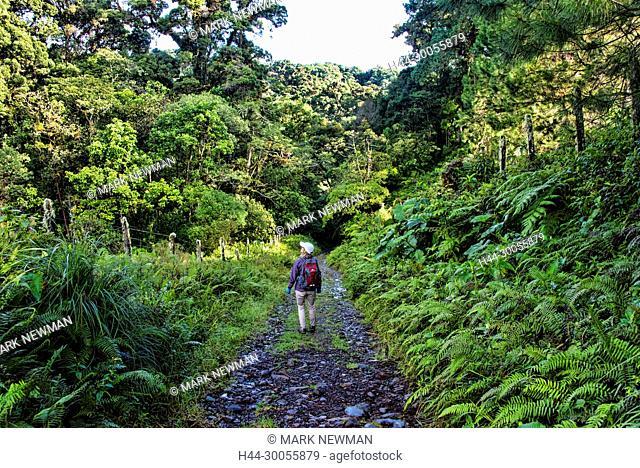 panamanian jungle, panama