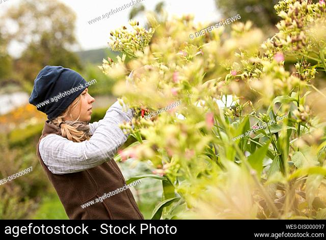 Austria, Schiltern, Alternative gardener at tobacco plant