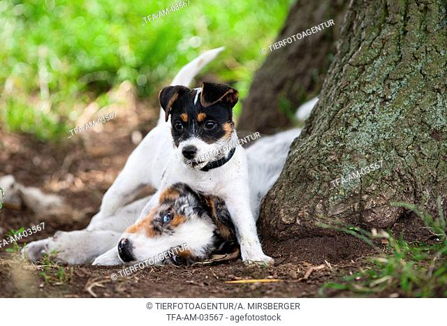 2 Puppies