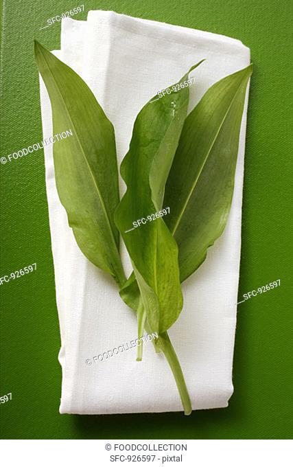 Fresh ramsons wild garlic leaves on white cloth