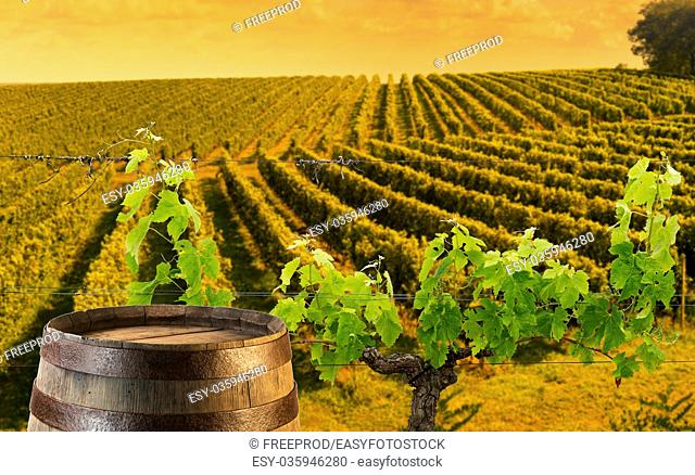 Red wine with barrel on vineyard in Bordeaux Wineyard, France