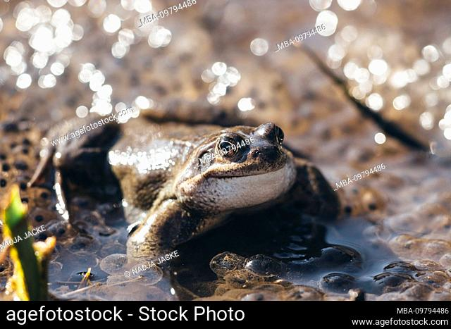 Toad on the shore, close-up