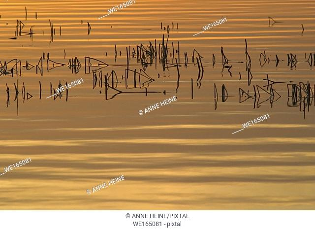 Ripples on a lake reflect the orange light of the setting sun, creating a pattern od horizontal and vertical lines. Alberta, Canada