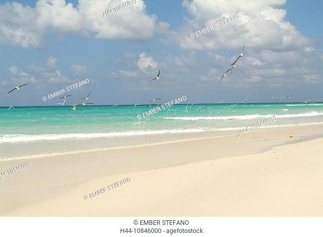 Yemen, Socotra island, Qalansiya beach, Arabic, Arabian, Arab, travel, UNESCO, world natural heritage site, Landscape