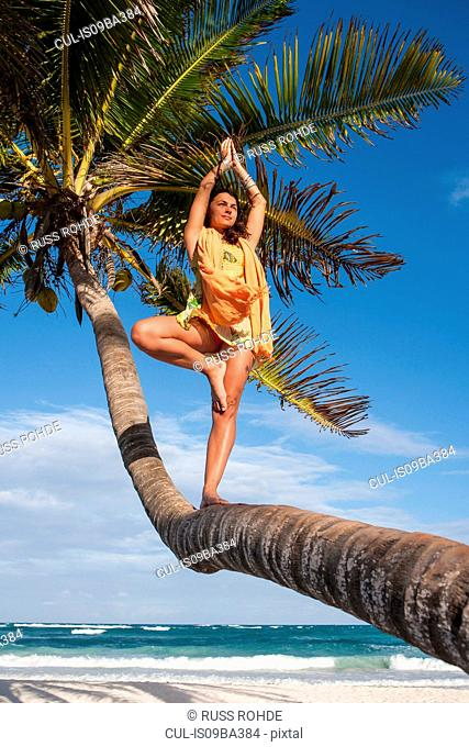 Young woman practicing tree yoga pose on palm tree trunk at beach, Tulum, Quintana Roo, Mexico