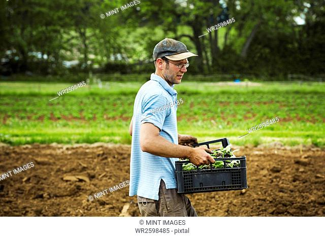 A man carrying a tray full of seedlings across a field