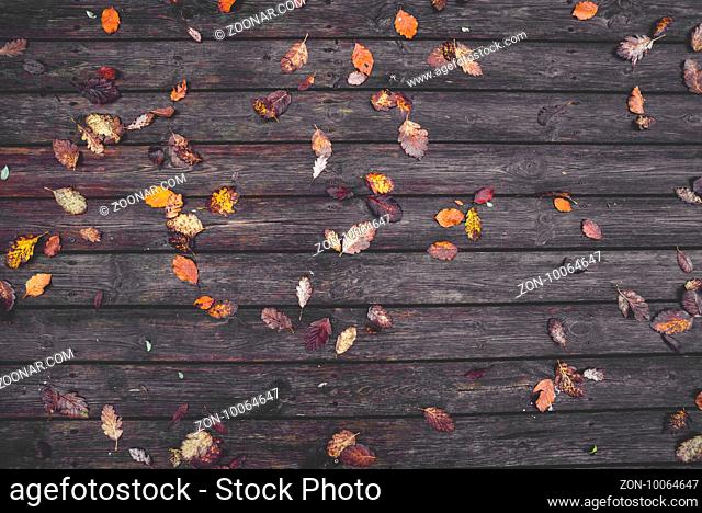 Autumn leaves on a wooden background with dark planks in the autumn season with colorful autumn leaves i various colors in the fall