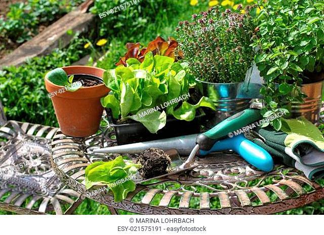 Gartenarbeit, Setzlinge, gardening
