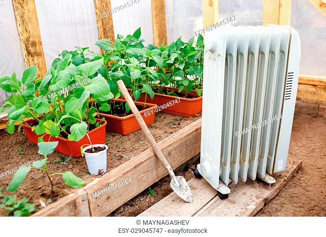 Electric oil heater in the greenhouse with seedlings of plants, planting in early spring during the cold weather