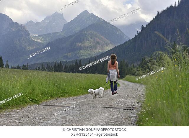 chemin longeant la riviere Bialka, pres de Lysa Polona, Parc National des Tatras, region Podhale, Massif des Tatras, Province Malopolska (Petite Pologne)