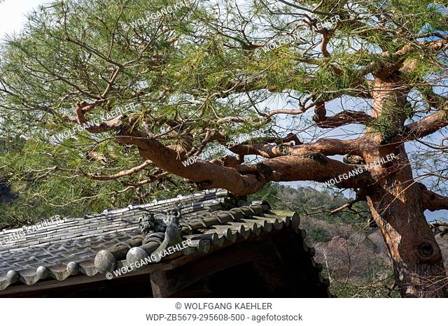 Detail of the roof and a pine tree at the Suiran, a Luxury Collection Hotel, next to the Tenryu-ji Temple in Kyoto, Japan