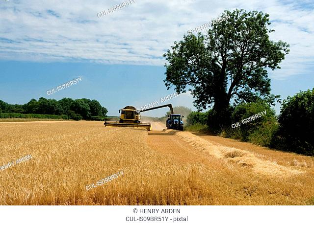 Combine harvester and tractor harvesting crop