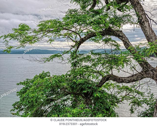 Trees and sea, Guanacaste, Costa-Rica