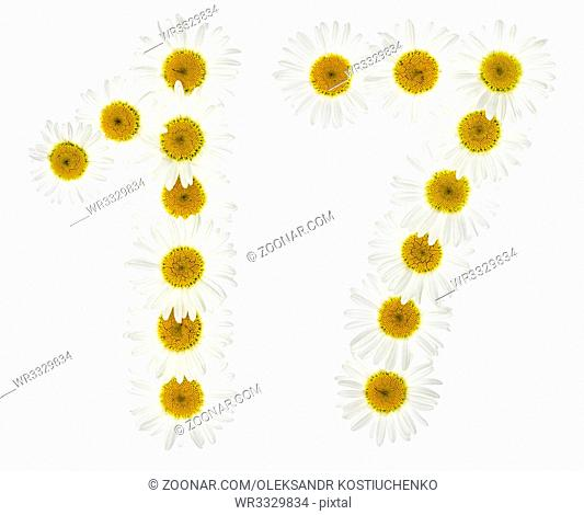 Arabic numeral 17, seventeen, from white flowers of chamomile, isolated on white background