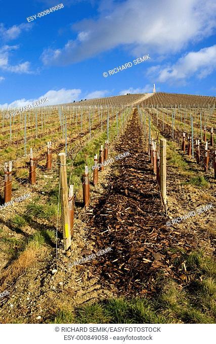 vineyard, Moët et Chandon, Ay, Champagne Region, France