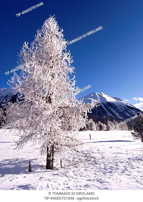 Switzerland, Engadine, Celerina. Winter scene
