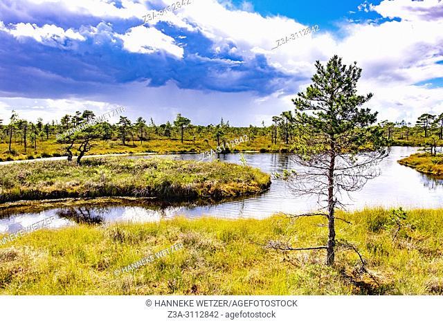 Kemeri Bog Trail, Kemeri National Park, Latvia, Baltic States, Europe