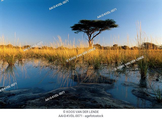 Tsau Pan, Moremi, Botswana