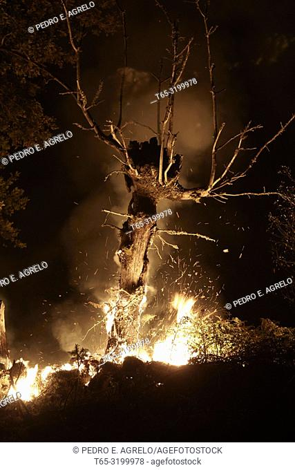 Forest Fires.- Emergency personnel are working on Thursday to control and extinguish up to 10 forest fires that affect the provinces of Lugo and Ourense and...
