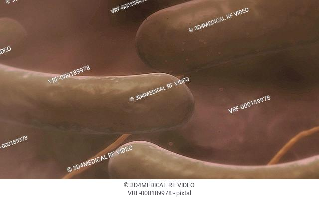 An animation showing the external structure of E.coli