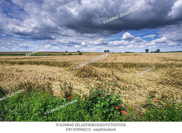 Field in Gryfino County, West Pomeranian Voivodeship in Poland