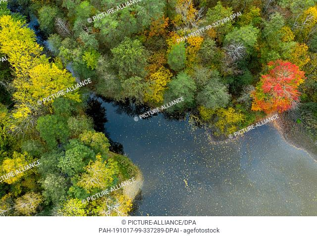 17 October 2019, Brandenburg, Nuthetal: Autumnally colored trees grow around a pond in the area of Rudower ponds (aerial photograph with a drone)