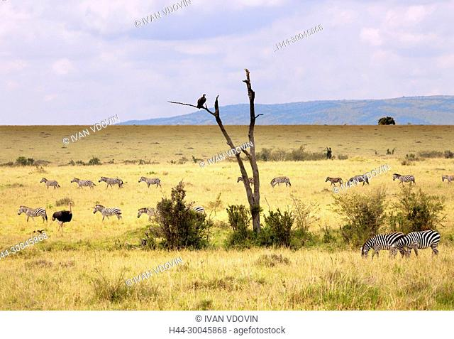 Landscape, Maasai Mara National Reserve, Kenya