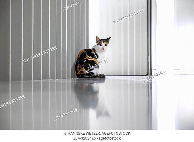 Cat in the minimalistic interior of former Philips factory building Anton at Strijp-S in Eindhoven, the Netherlands
